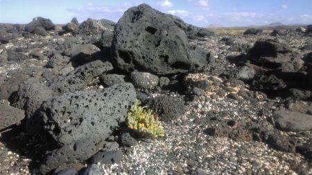 plaża wulkaniczna